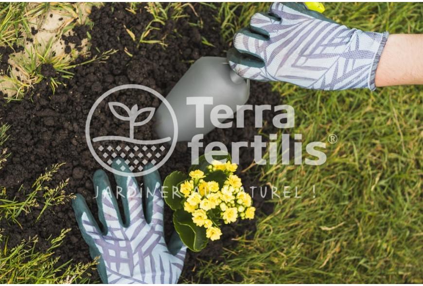 Réussir ses semis de fleurs et légumes