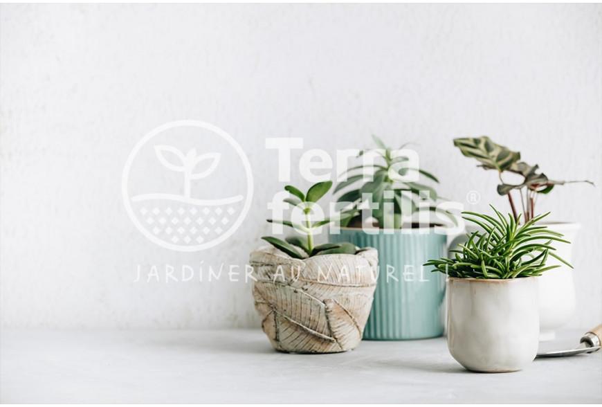 Les plantes d'intérieur, alliées de votre maison