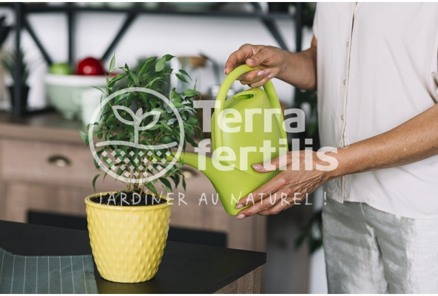 Les plantes pendant les vacances