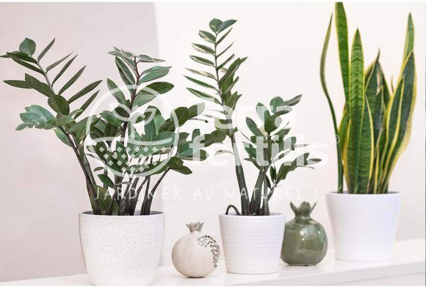 Les plantes d'intérieur faciles à entretenir