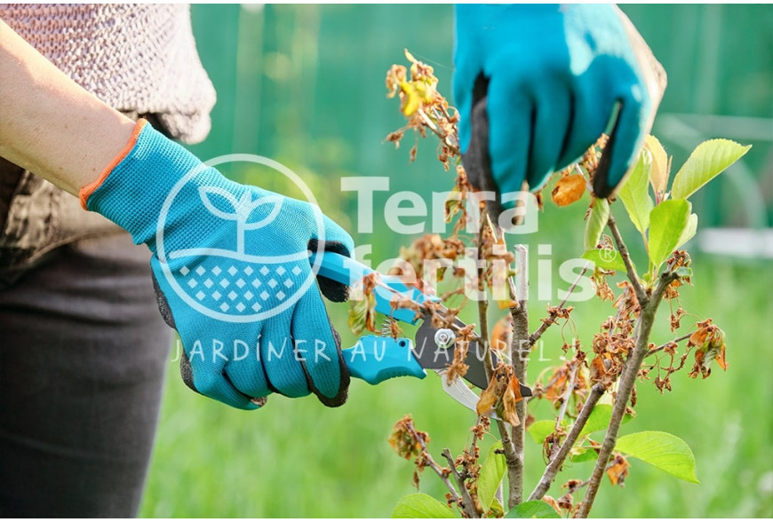 Quand tailler les arbres fruitiers?