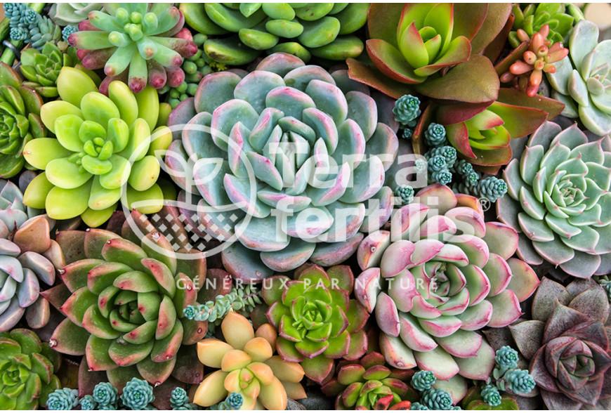Comment entretenir des plantes succulentes ?