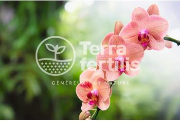 Comment bien entretenir ses orchidées ?