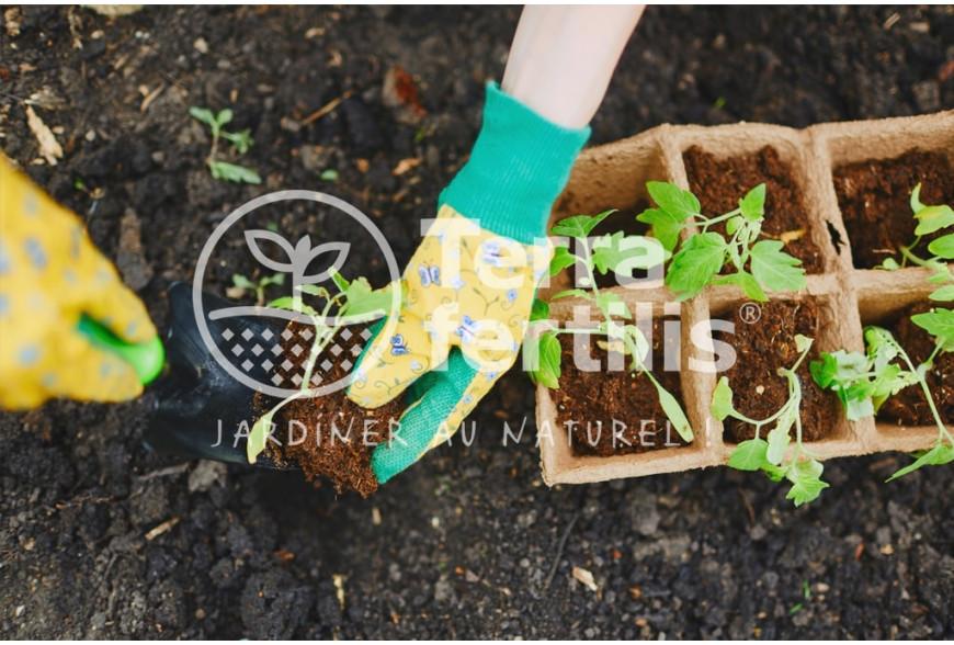Le jardinage comme anti-stress