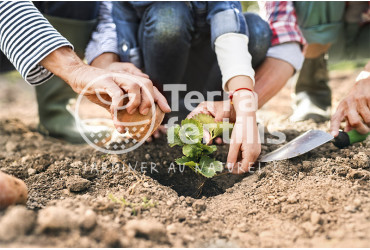 Adopter les bons réflexes pour un jardin responsable