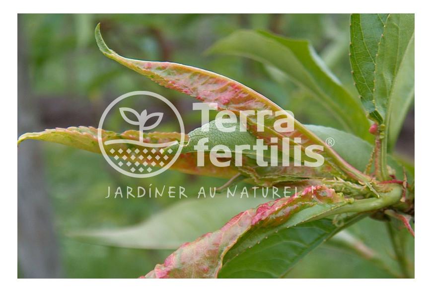 Comment lutter contre les maladies du printemps au jardin ?
