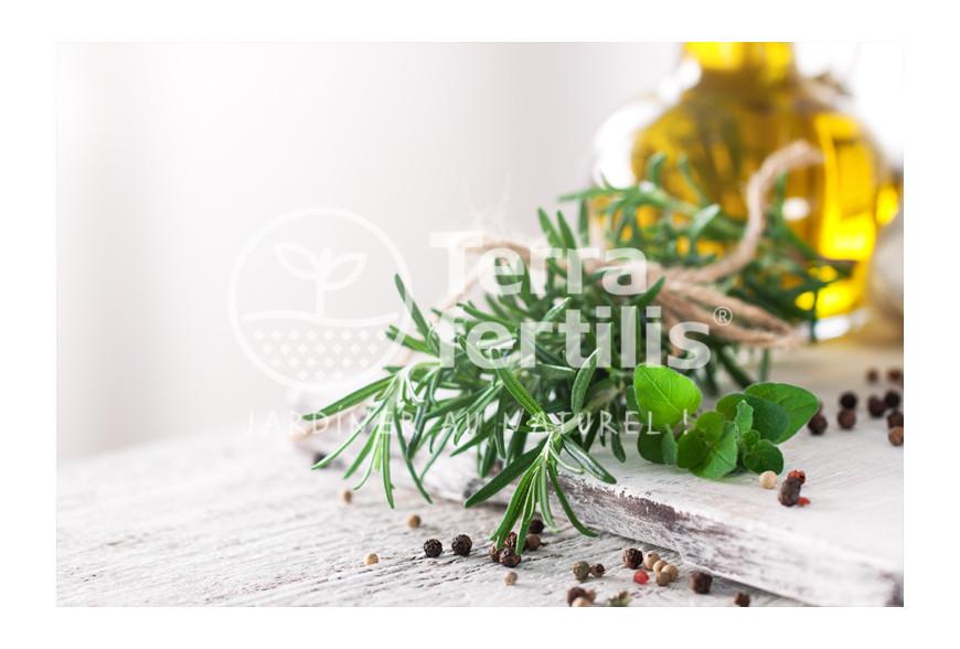 Les plantes aromatiques en cuisine