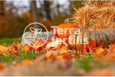 Préparer l'automne au jardin